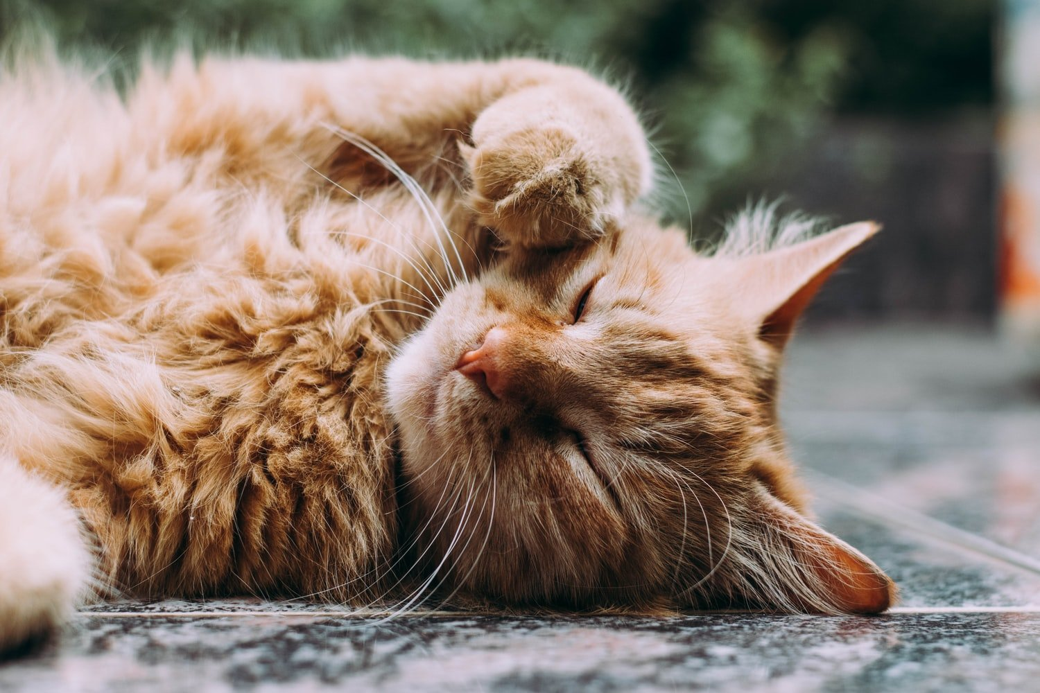 alternative to lysine for cats