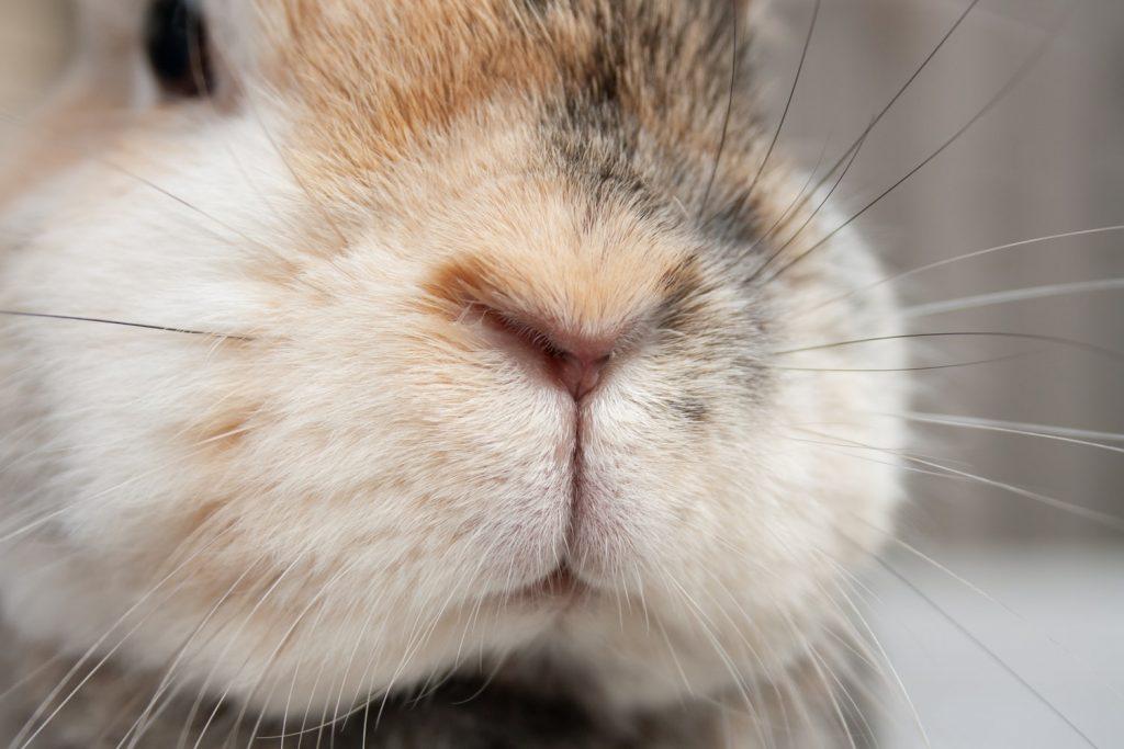 rabbit no sound