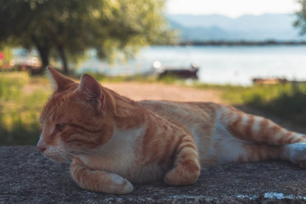 Can cats eat Beyond Meat