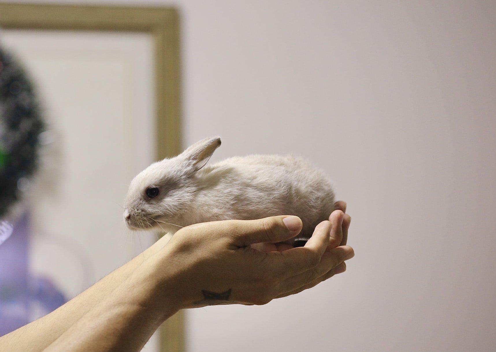 Do rabbits eat iris