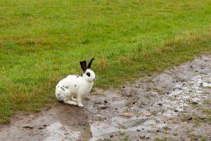 Do rabbits eat delphiniums