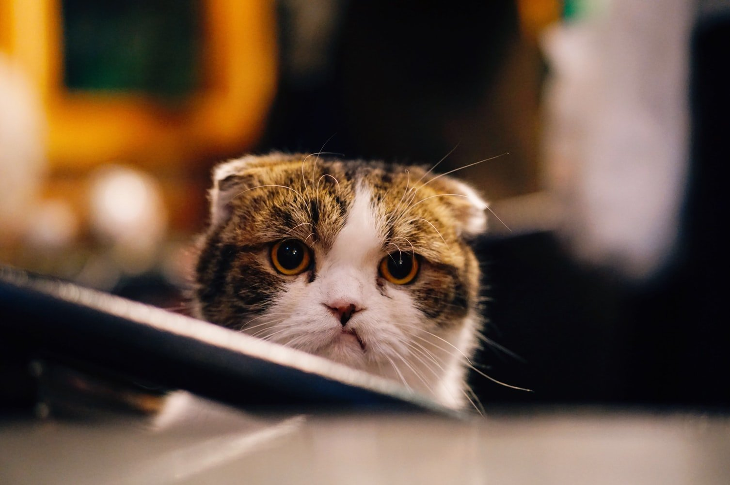 Do cats go to heaven when they die