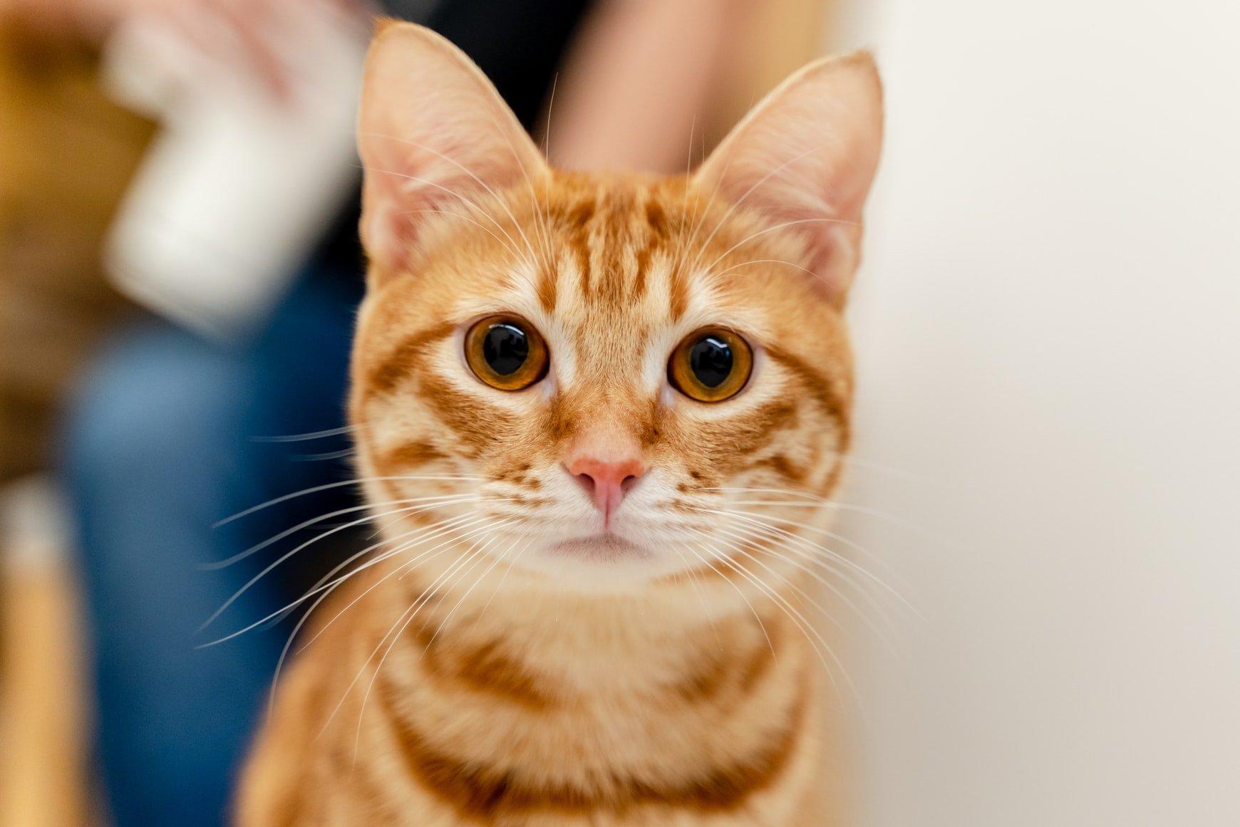 can cats eat shellfish