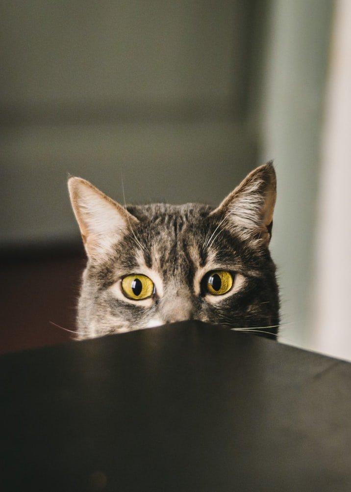 My cat follows me everywhere but won't cuddle