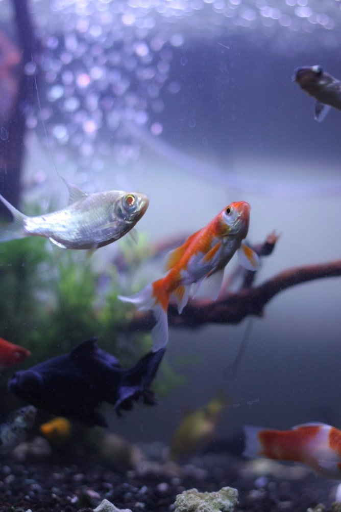 how to keep fish tank clean without changing water