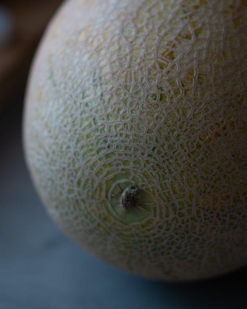 Can dogs eat Galia melon