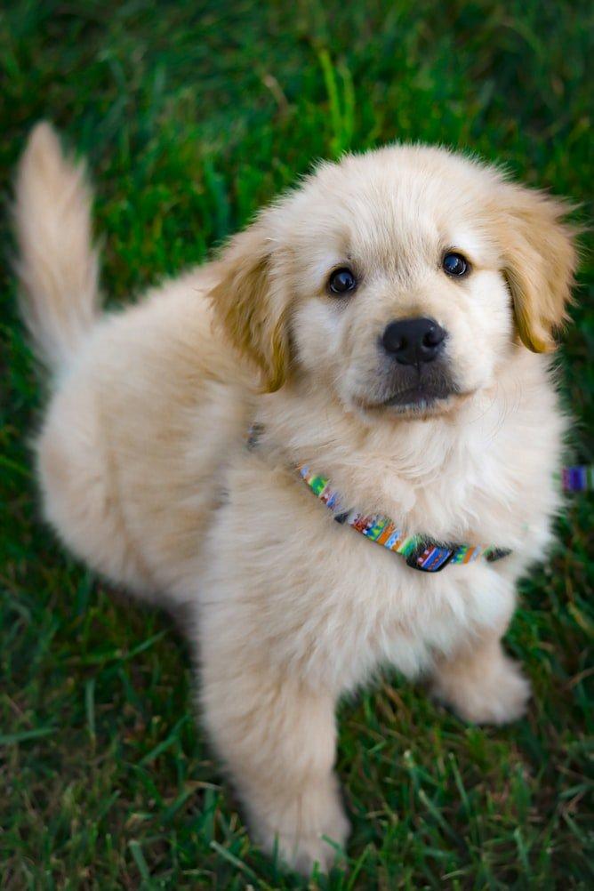 fat puppy belly