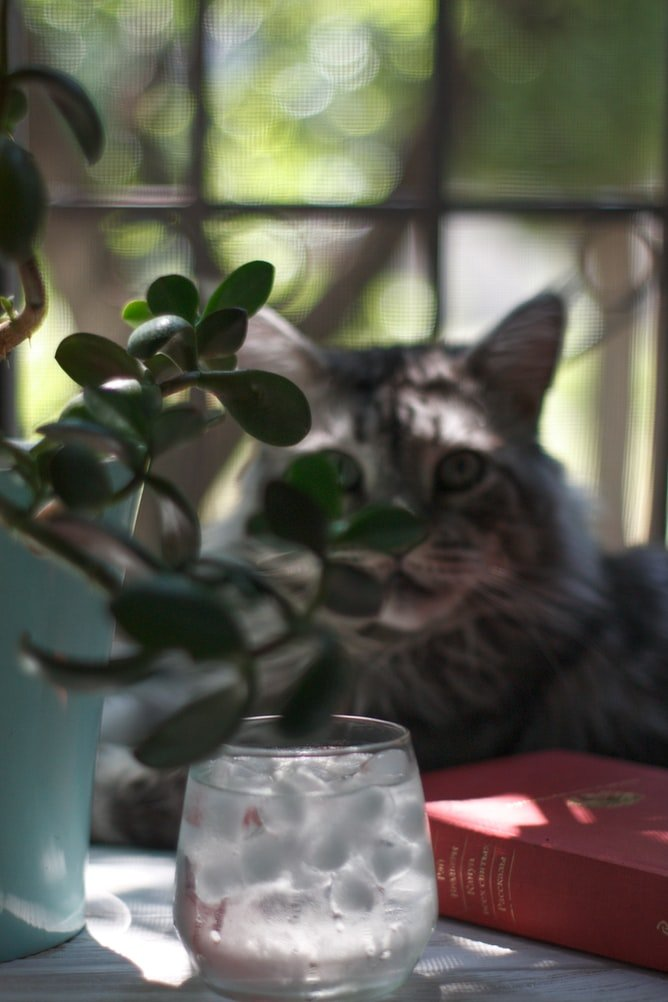cat looking at water but not drinking