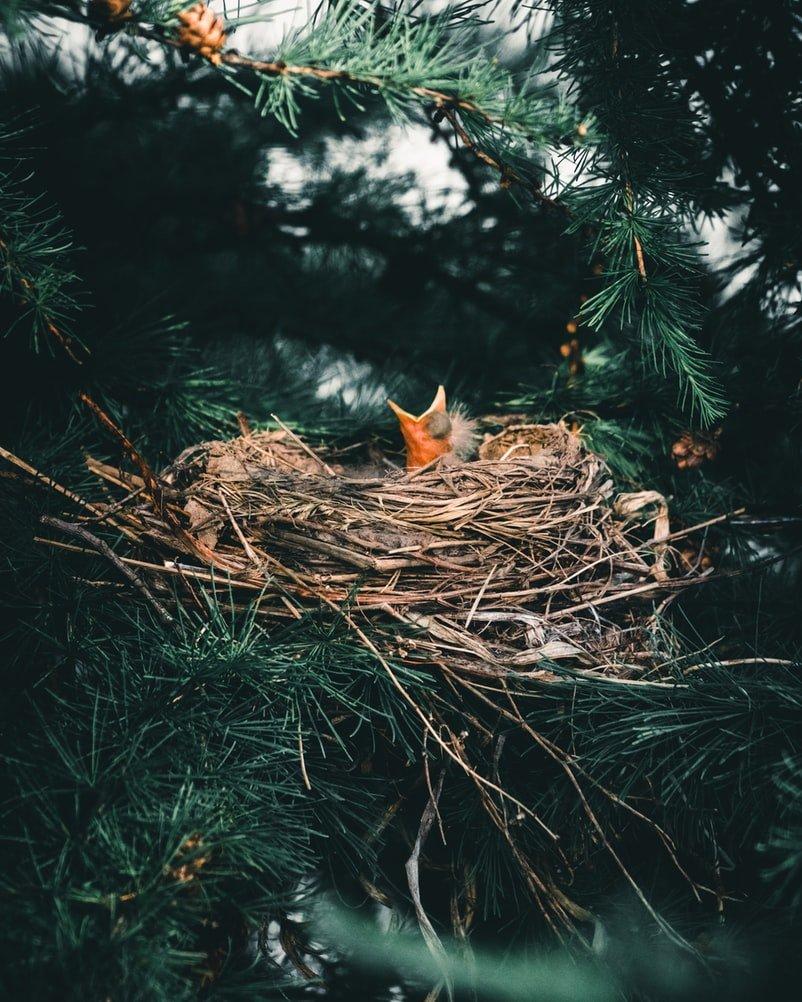 What do baby birds eat