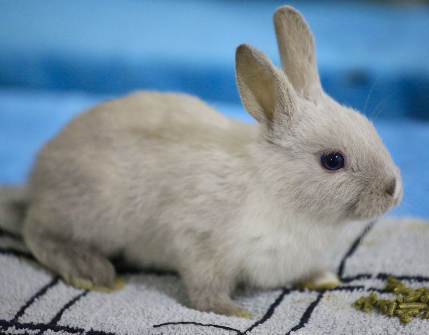rabbit died suddenly with eyes open