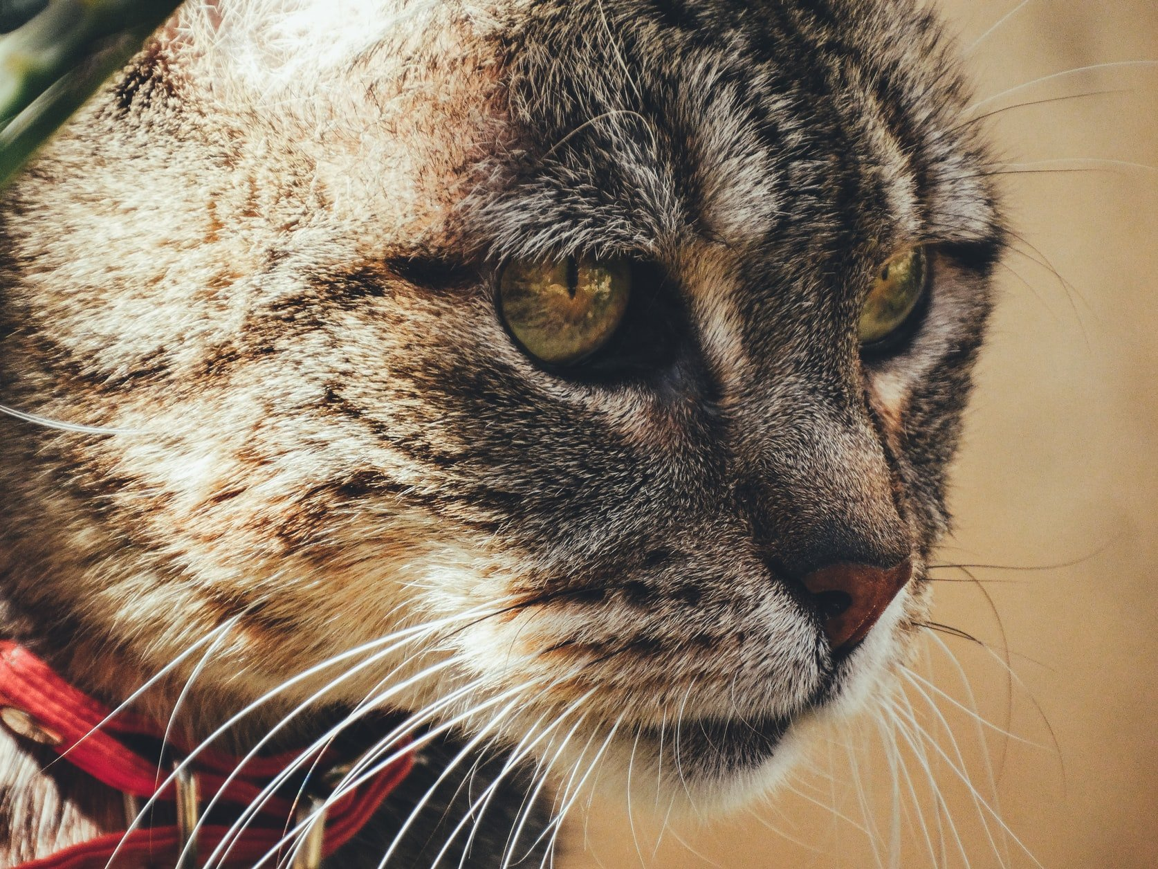 cat sneezing after vet visit