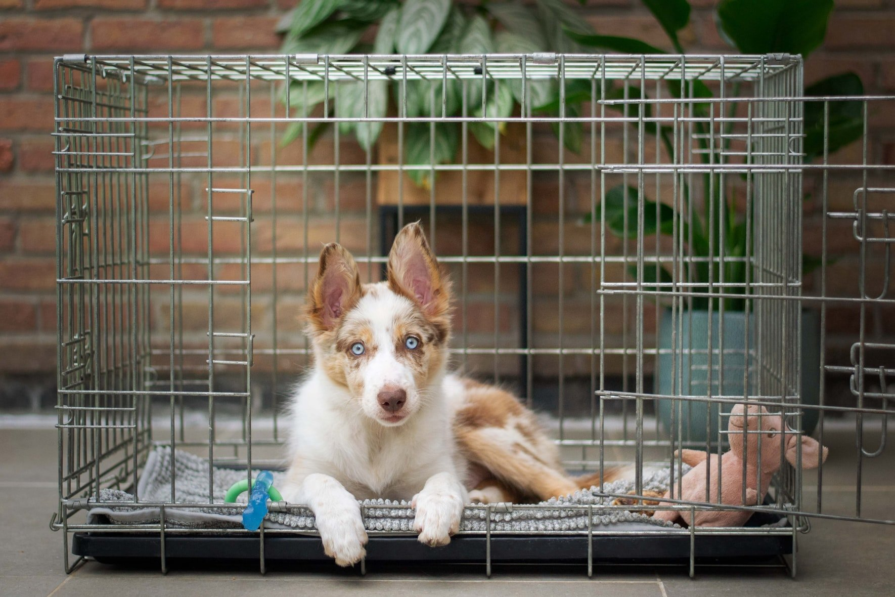dog whining in crate all of a sudden