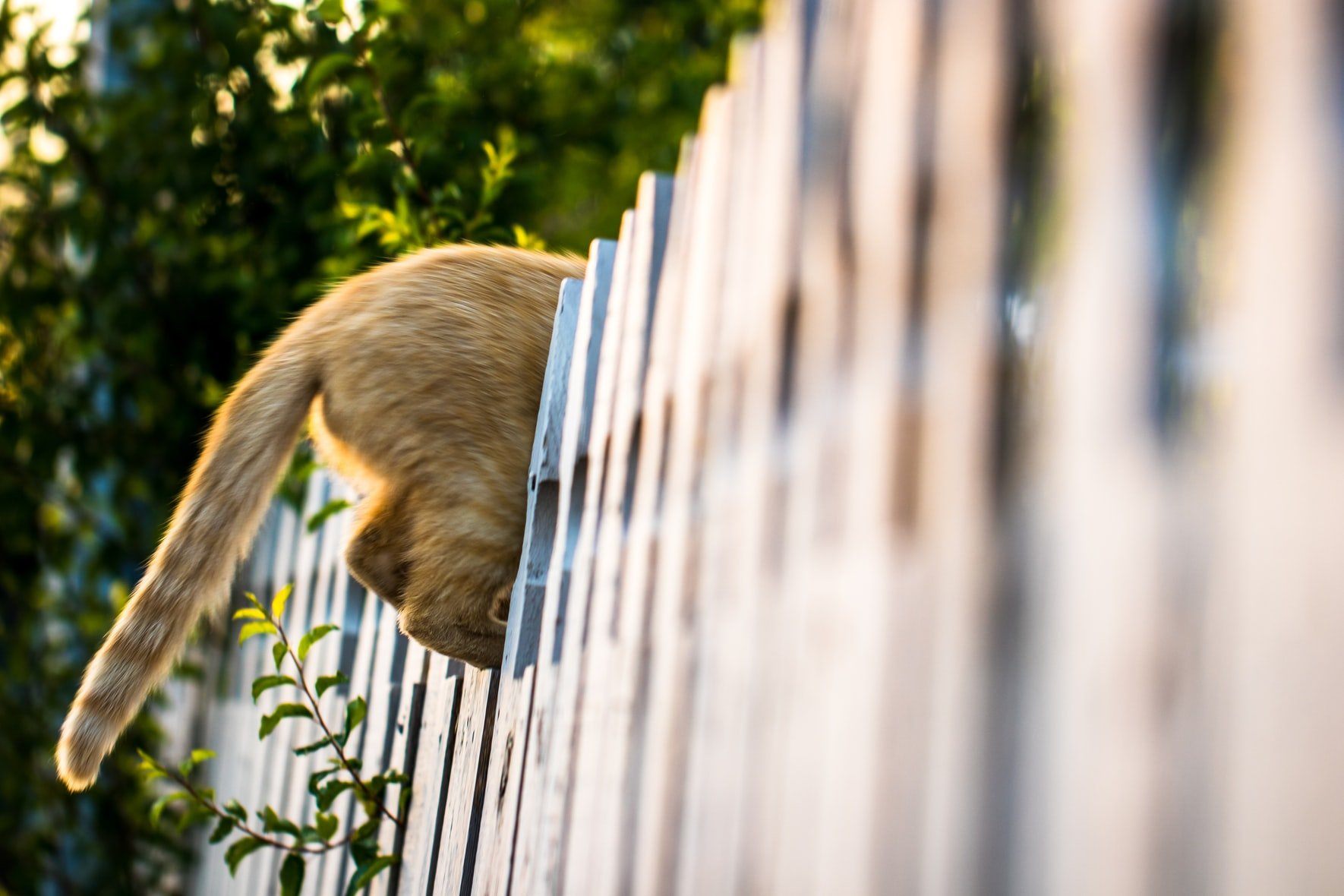 Why do cats chase their tails