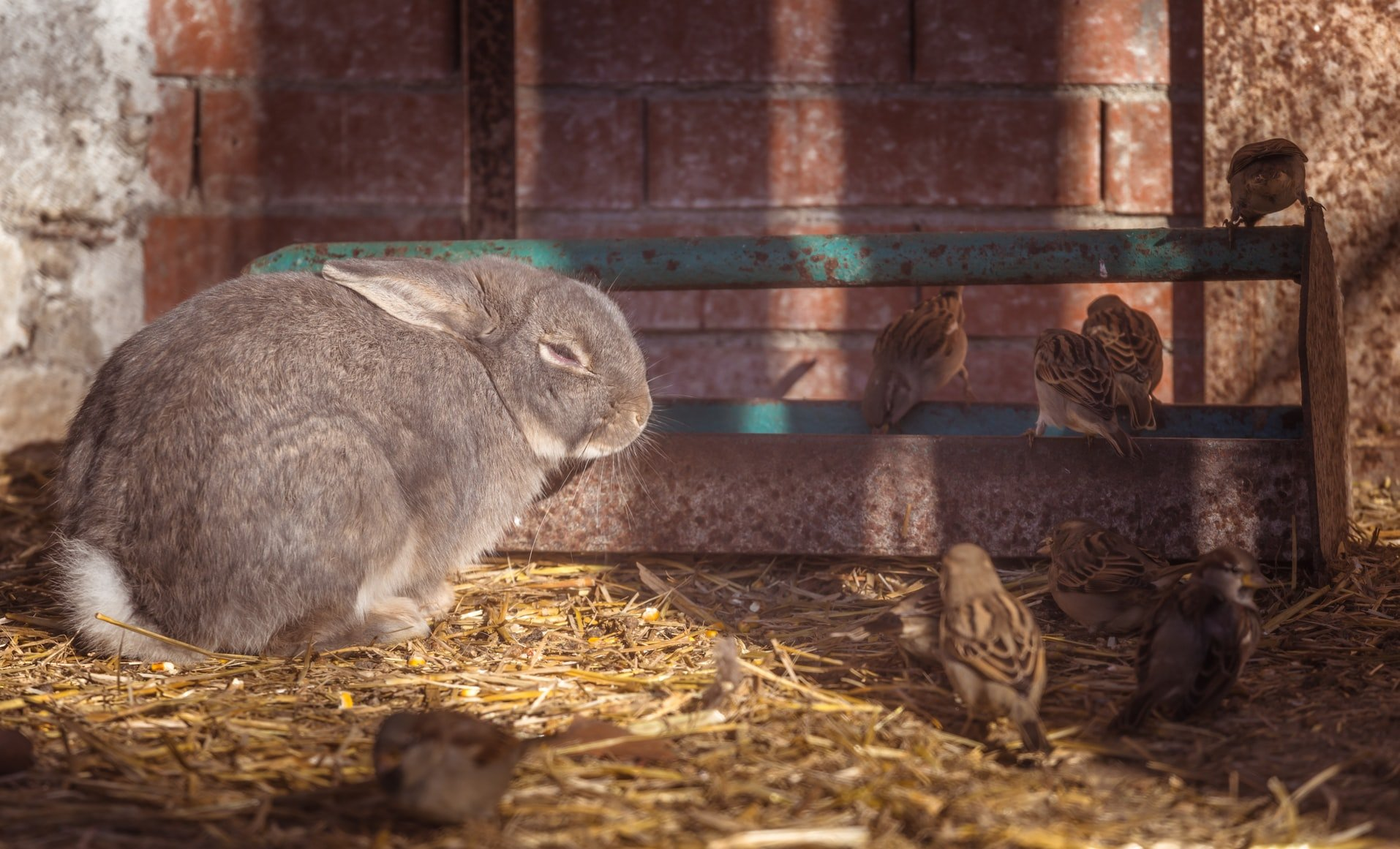 Can rabbits eat willow