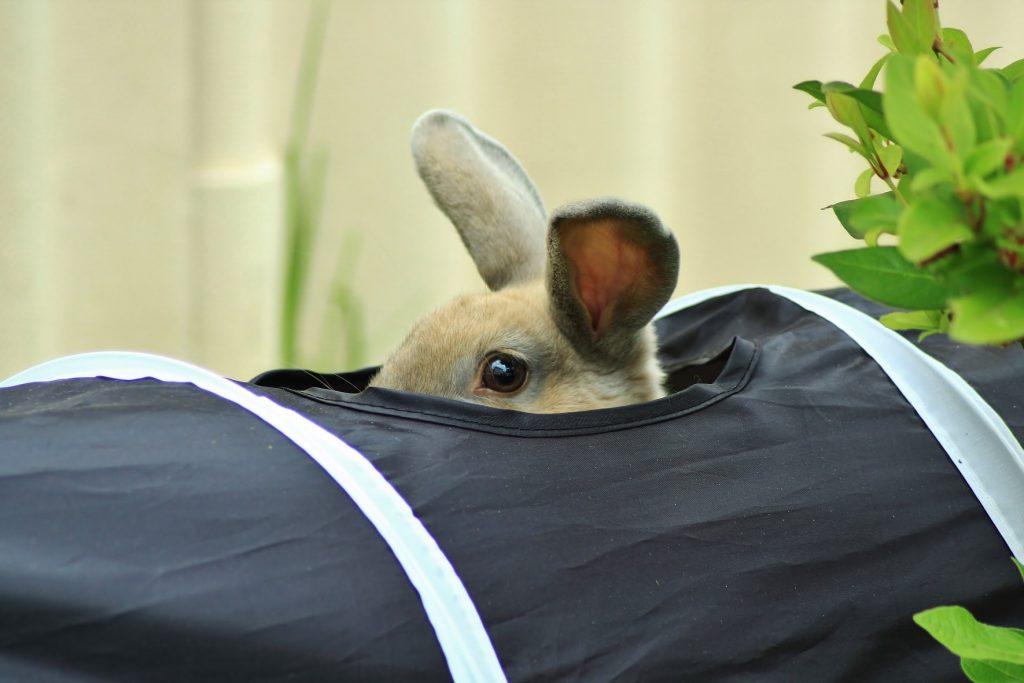 do rabbits eat dog poop