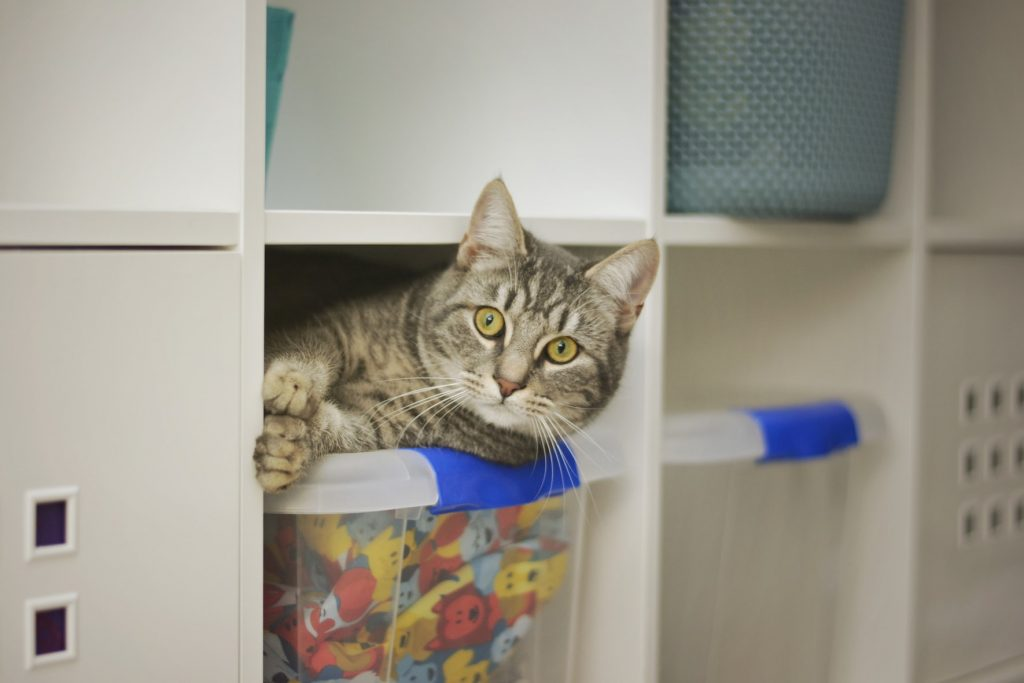 cat sleeping in closet