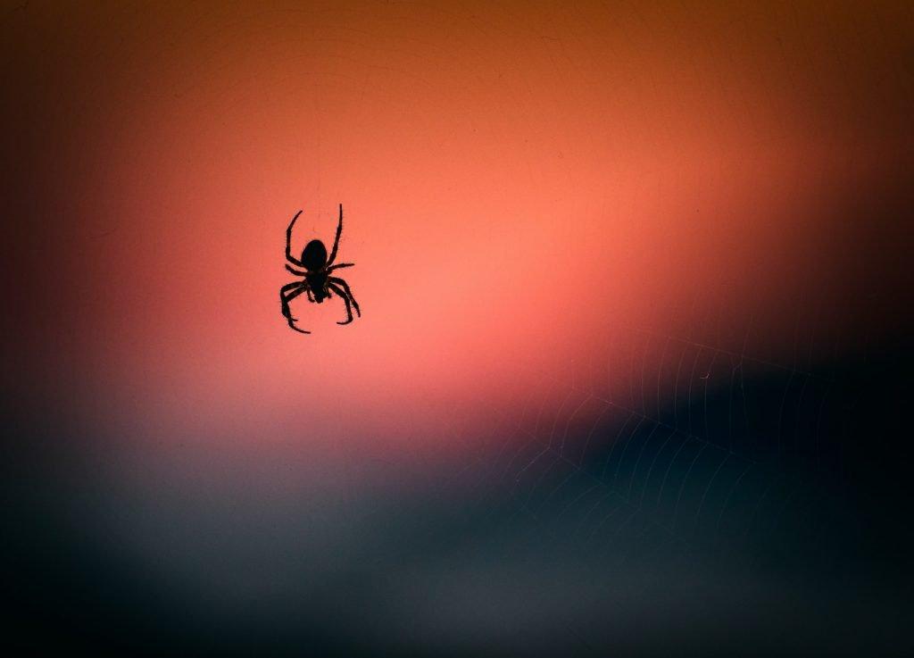 Do cats kill spiders