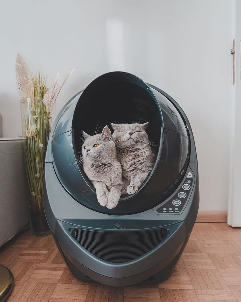 locking cat in room with litter box