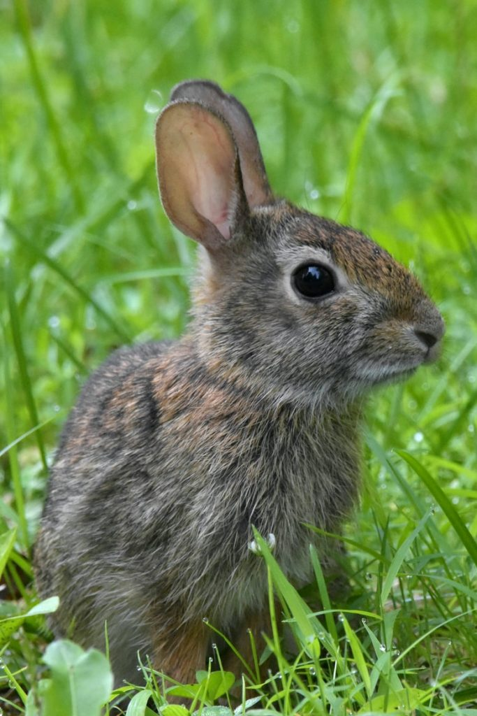 Do rabbits eat moss